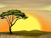 beautiful landscape and tree