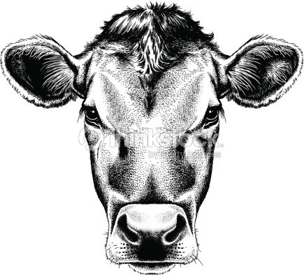 Vector Illustration Portrait Of A Cows Face stock vector ...