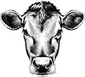 Black and white sketch of a cow's face.