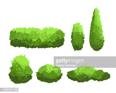 Vector illustration set of garden green bushes and decorative trees different shapes. Shrub and bush collection in cartoon style isolated on white background. : stock vector