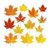 Vector illustration, set of bright realistic autumn leaves. Fall leaves background.