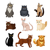 Vector illustrations of cat different breeds set, cute pet animals, lovely kitten on white background in flat style design