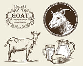 Vector image of a goat, a jug of goat milk and goat cheese. A set of agricultural illustrations in the style of engraving.