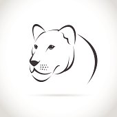 Vector image of an female lion head on white background