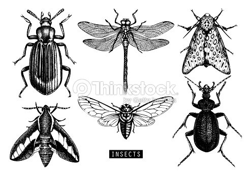 Vector insects collection