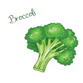 vector isolated cartoon fresh hand drawn broccoli