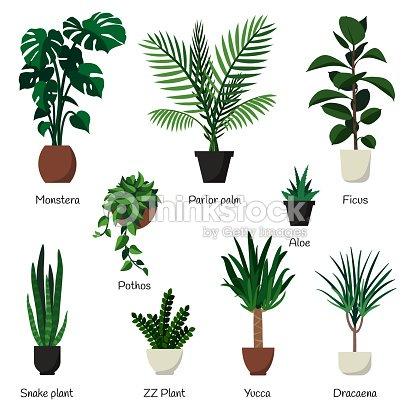 Vektor Isoliert Set Verschiedene Indoor Zierpflanzen Mit Namen Am
