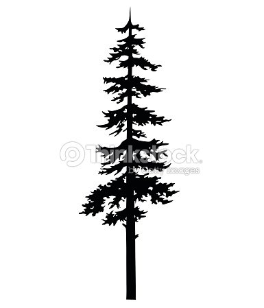 6694284db Vector isolated silhouette of a coniferous tree. Can be used in design,  illustration, tattoo.