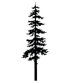 Vector isolated silhouette of a coniferous tree.