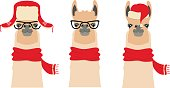 Vector Lama Head set. cartoon flat style animals in glasses and winter red new year, christmas clothing: Red hat scarf hood headphones.Object for poster banner print design. Advertisement element