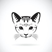 Vector of a cat face on white background, Pet. Animals.
