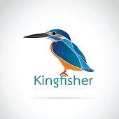 Vector of Common kingfisher (Alcedo atthis) on white background. Bird Design.