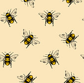 Vector seamless pattern with honey bee. Engraving style.