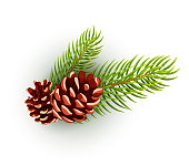 Pine cone, spruce fir tree branch with leaves. Hand drawn christmas, winter and new year holiday decoration symbol. Nature and forest sign. Vector isolated illustration