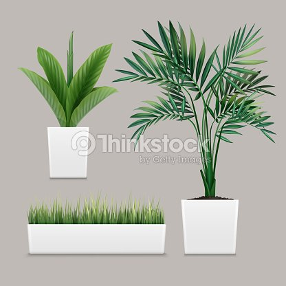 Vector plants potted : stock vector