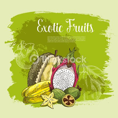 vector poster of exotic fruits durian or carambola vector art