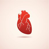 vector red human heart icon. EPS10. Contains transparent objects
