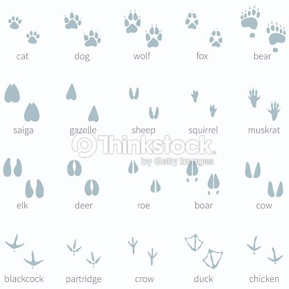 vector set of animals footprint in the snow vector art thinkstock. Black Bedroom Furniture Sets. Home Design Ideas