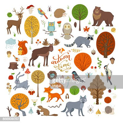Vector set of autumn forest trees and animals. : Vector Art