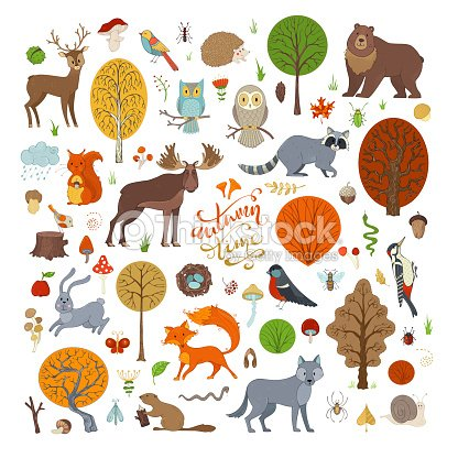 Vector set of autumn forest trees and animals. : stock vector
