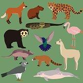Vector set of cartoon south american animals. Anaconda, jaguar, chilean flamingo, maned wolf, harpy eagle, coati, armadillo, colibri, lama, capybara, spectacled bear, amazon river dolphin.