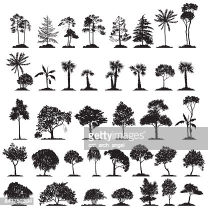 vector set of deciduous trees : Vector Art
