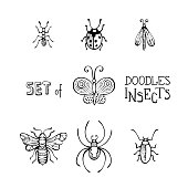 Hand-drawn linear butterfly, bee, bug, ladybird, ant, spider and moth isolated on white background. Can be used in colouring book for children.