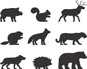 Vector set of figures of wild animals. Silhouettes wild animals isolated on white. Black wild animals. Shape boar, squirrels, deer, beaver, fox, puma, wolf, hedgehog and bear.