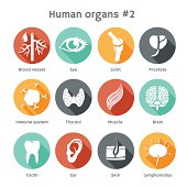 Vector round icons of human organs and systems Flat design