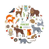 Hedgehog, wolf, beaver, deer, fox, owl, hare, snail, squirrel. Zoo cartoon collection for children books, birthday invitations and posters.