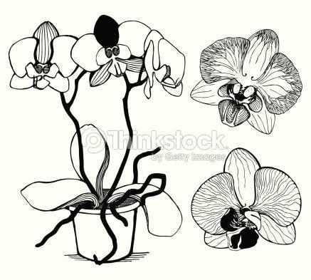 vektorsatz von hand gezeichnet orchideen blumen isoliert auf weiss vektorgrafik thinkstock. Black Bedroom Furniture Sets. Home Design Ideas