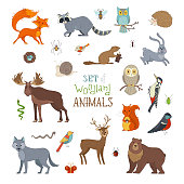 Cute animals isolated on white background. Moose, bear, fox, wolf, deer, owl, hare, squirrel, raccoon, hedgehog and other mammals and birds.