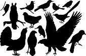 vector set of woodland birds silhouettes