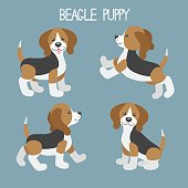 Vector set with cute cartoon dog puppies.Beagle dog in different poses: walk, jump, sit, stand.