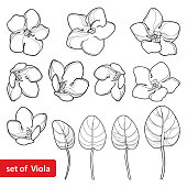 Vector set with outline Saintpaulia or African violet flower and leaf in black isolated on white background. Perennial flowers in contour style for floriculture, summer design and coloring book.