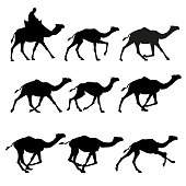 Set of vector silhouettes of camels - walking, galloping, amble.