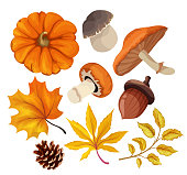 Sketch autumn forest symbols set. Maple oak birch tree dry leaves, pumpkin vegetable, acorn and fir cone and mushrooms - porchini, chanterelle set. Hand drawn sign of harvest, october nature. Vector