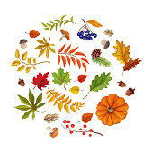 Sketch autumn forest symbols pattern. Maple oak birch tree dry leaves, pumpkin vegetable, acorn and fir cone and mushrooms - porchini, chanterelle. Hand drawn sign of harvest, october nature. Vector