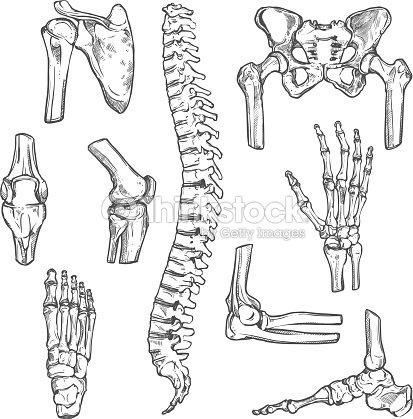 Vektoricons Skizze Des Menschlichen Körpers Knochen Und Gelenke ...