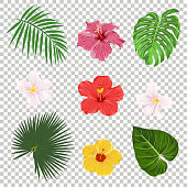 Vector illustration of tropical leaves and flowers icon set isolated on transparency grid background. Palm leaf, banana leaf, hibiscus and plumeria flowers. Jungle tree design templates. Botanical and