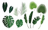 Tropical palm exotoc jungle leaves set. Banana, monstera green leaf isolated on white background. Vector illustration stock vector.