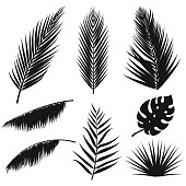 Vector tropical palm leaves silhouette set isolated on white background. Summer exotic flora. Jungle palm and monstera leaf. Illustration for your design. Eps 10.