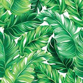 vector seamless design with beautoful tropical leaves. Exotic palms growing in vertical direction.