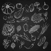 Vegetables chalk sketch icons. Vector harvest of pumpkin, cabbage or eggplant and patisony zucchini squash, carrot or radish and tomato, cucumber or potato and vegetarian cauliflower or asparagus