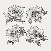 Vector floral composition, bouquet of hand drawn anemone flowers, buds and leaves in sketch style isolated on light background. Beautiful illustration for spring design
