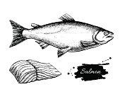 Vector vintage salmon drawing. Hand drawn monochrome seafood illustration. Great for menu, poster or label.