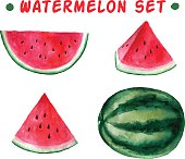 Vector watercolor hand drawn watermelon set. Organic food illustration.