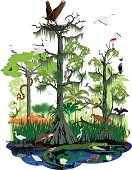 vector wetland or Florida Everglades landscape with different wetland animals