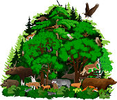 vector woodland forest with animals illustration