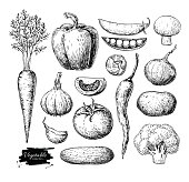 Vegetable hand drawn vector set. Isolated vegatarian engraved style object. Detailed garden food drawing. Farm market product. Great for menu, label, icon, poster, sign
